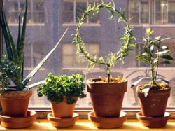 Indoor Herb Garden Winter Edible landscaping how to overwinter herb plants indoors garden edible landscaping how to overwinter herb plants indoors workwithnaturefo