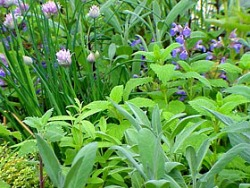 Edible Landscaping   How To: Start A Culinary Herb Garden