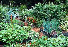 edible landscaping vegetable garden design - Flower And Vegetable Garden Ideas