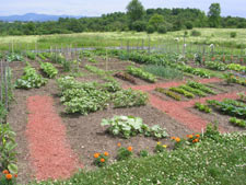 plan your vegetable garden to have maximum space for vining vegetables such as cucumbers and clearly defined pathways