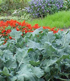 Garden Design Vegetables And Flowers edible landscaping - vegetable garden design - garden