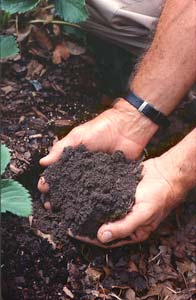 The feel and smell of rich garden soil is unmistakable. How to make it? Organic matter.