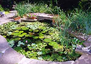 Bring An Exotic Touch To Your Patio, Deck, Or Yard By Making A Small Water  Garden In A Tub. Use A Plastic Or Glazed Ceramic Container Or A  Plastic Lined, ...