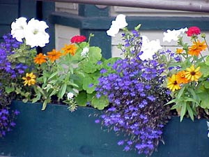 Flower Containers on By National Gardening Association Editors
