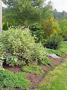 Planning a low maintenance landscape for No maintenance flowering shrubs