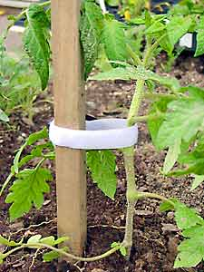 Simple to use and adjust, Tomato Ties are also reusable year-to-year