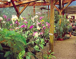 Blooming orchids fill gift shop benches January through March.