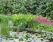 Daylilies grow well at the edges of ponds and streams.