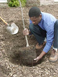 Plant trees and shrubs in warmer parts of the country.