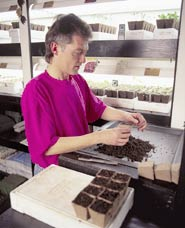 The waist-high potting bench makes seed sowing easy on the back.