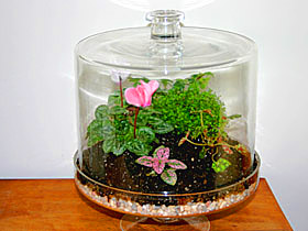 Terrariums can take many forms all you really need is a clear glass container without drainage holes that s large enough to fit the plant or plants without