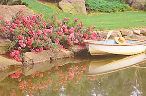 Use a low growing roses such as 'Flower Carpet Pink' to border beds and ponds.