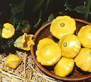 'Sunburst' summer squash