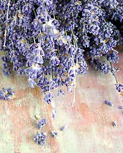 Dried lavender flowers remain beautiful and fragrant for years.