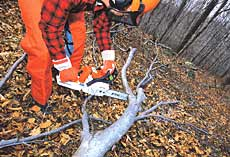 Cut off the most accessible branches first, then reposition the stump the remove tension from remaining branches.