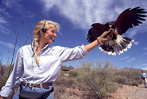 A Harris hawk stars with trainer Sue Tiegielski at the raptor demonstration.