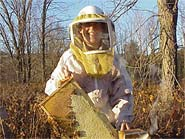 A veil, coveralls, and a smoker are basic tools for beginning beekeepers.