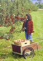 Healthy Home Orchards