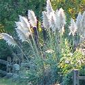 Gardening articles landscaping container gardening for Ornamental grasses for ponds