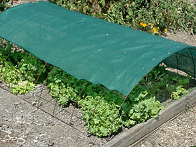 Exceptionnel 2827. Shade Cloth ...