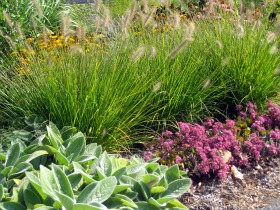 for Ornamental grasses for small spaces