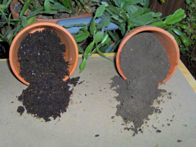 for Topsoil vs potting soil