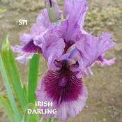 Remarks by Dee S: Snowpeak Iris