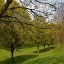 London's Green Parks