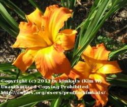 Thumb of 2011-02-21/kimkats/58c5f0