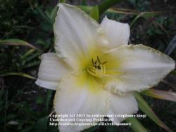 Thumb of 2011-04-16/rebloomnut/e77174