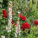 The Chelsea Flower Show 2011 (Part 2)