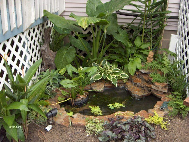 Ponds and water gardening forum easy beginner pond for Easy pond plants