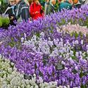 Hampton Court Palace Flower Show (Part 2)