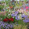 Hampton Court Palace Flower Show (Part 3)