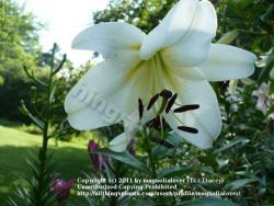 Thumb of 2011-07-20/magnolialover/0ca28c