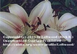 Thumb of 2011-07-28/Leftwood/fc2c01