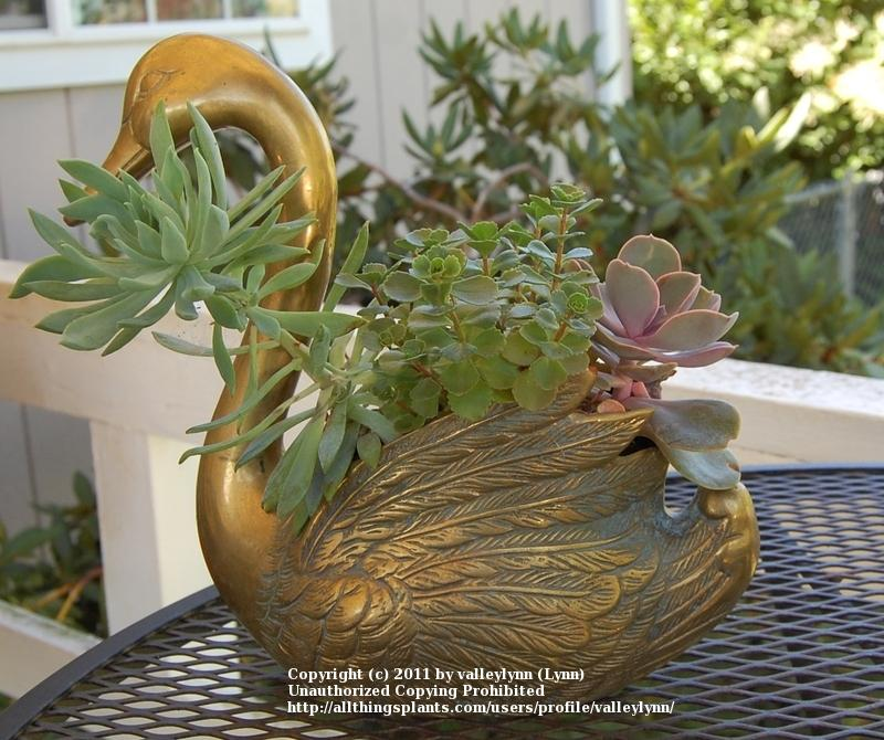 A Source For Cheap Gardening Containers