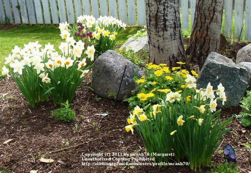 Planting Under Deciduous Trees : Many spring blooming bulbs can be planted under deciduous trees and