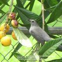 Attract Birds to Your Home and Garden