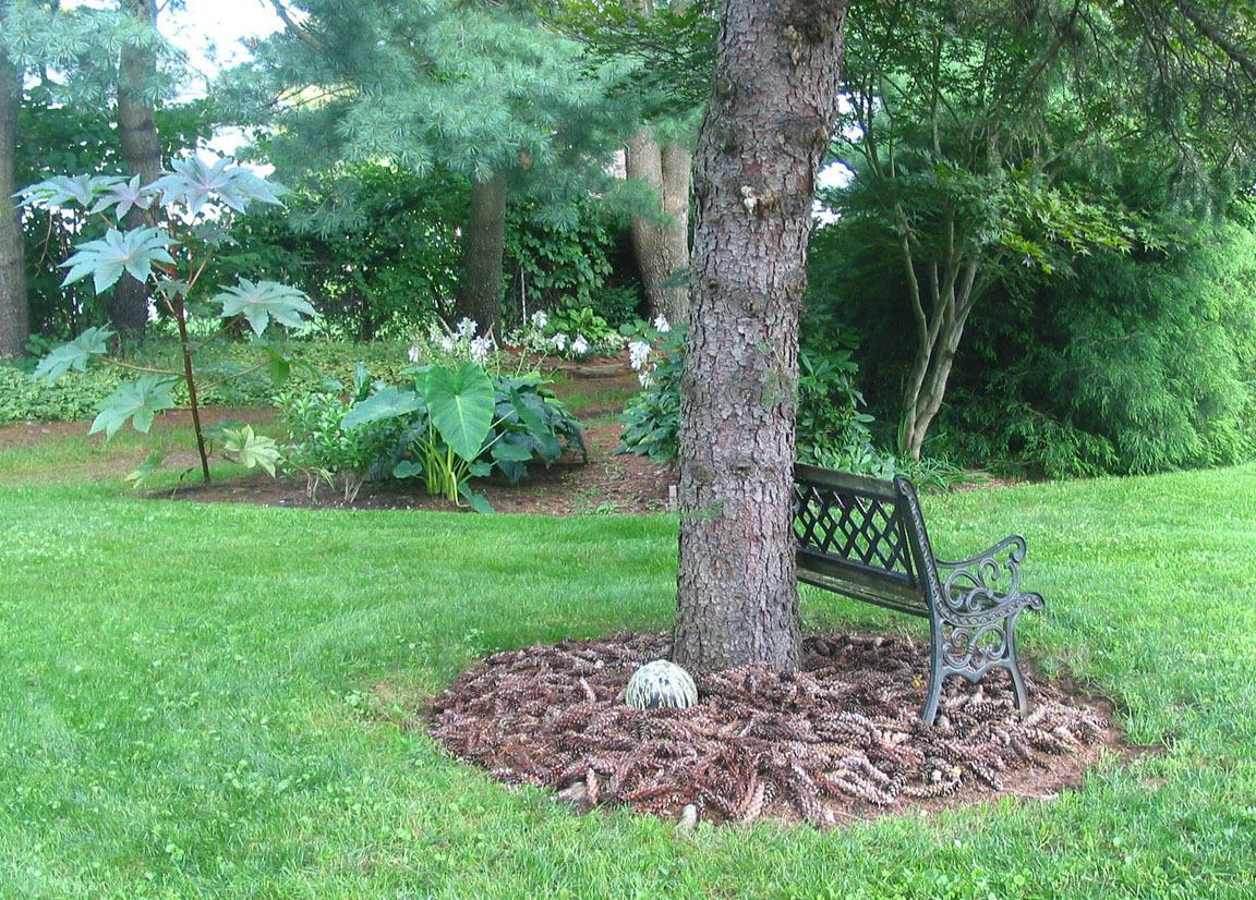Uses For Pinecones Very Nice Garden Org