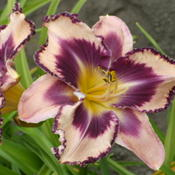 Picture taken at Maryott's Daylily Gardens