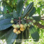 Date: March 19, 2011Fruit at different stages of ripening