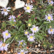 Location: Middle TennesseeDate: 9/7/2011A native plant