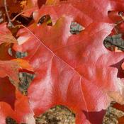 Location: Ontario, CanadaDate: Octoberfall foliage