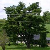 Location: Whitinger Farm, Elroy, WisconsinDate: May 2004