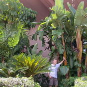 Location: Epcot Center, Orlando, FLDate: Jul 15, 2005 1:48 PMThe plant in question is the one I'm leaning against