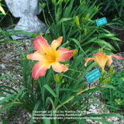 Location: Valley of the Daylilies in Lebanon, OH. Home of Dan (the hybridizer) and Jackie BachmanDate: Jul 7, 2005 10:49 AM