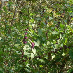 2011-09-26/wildflowers/341a1a