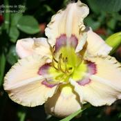 Location: In my Mom's gardenDate: 2008-07-01