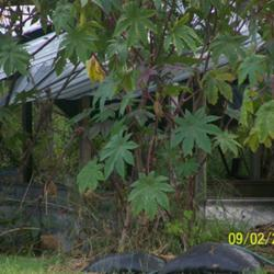 Thumb of 2011-10-03/Riverdolphin/847e31